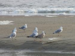 Foto meeuwen op het strand
